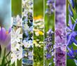 Obrazy na płótnie, fototapety, zdjęcia, fotoobrazy drukowane : Farben des Frühlings