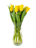 Yellow tulips in glass vase with water isolated on white