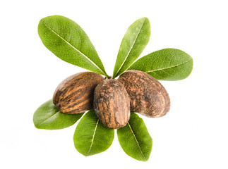 Shea nuts and leaves