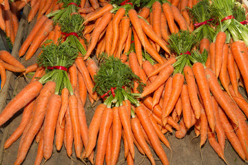 Fresh harvest of carrots in bundles.