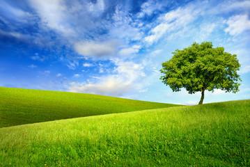 Baum auf hügeligen Wiesen