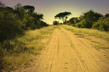 African dirt road at dawn and distant thorn tree