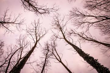 abbracciando il cielo