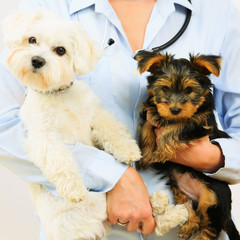 Veterinary treatment - lovely puppies and  veterinary