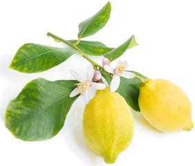 lemon  with flowers and leaves
