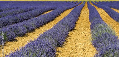 Plateau de Valensole (Provence), lavender © Claudio Colombo