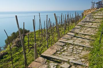Stone Track Seaview