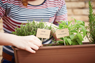 Thyme and sage plants on urban garden