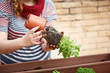 Young woman's hands transplanting mint