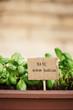 Basil plant on urban garden