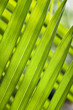 long narrow green leaves tilted