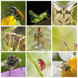 collage of insects
