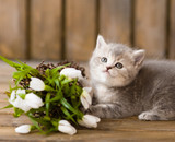 little british shorthair kitten with a bouquet