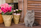 kitten sitting beside a flower pot. looking away