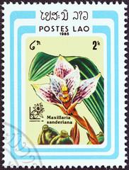 Maxillaria sanderiana orchid (Laos 1985)
