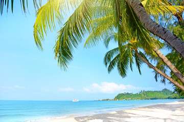 Beach with palm trees. Klong Prao Beach