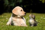 Fototapety Welpe und Kätzchen