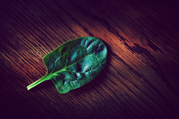 single spinach leaf