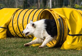 cane che esce dal tunnel