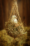 Easter. Little chicken sitting in the nest