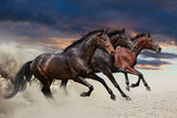 Horses running at a gallop along the sandy field - 62166147