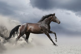 Black horse run gallop in dust desert