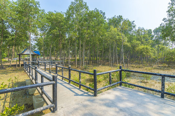 Jetty and forest mangrove