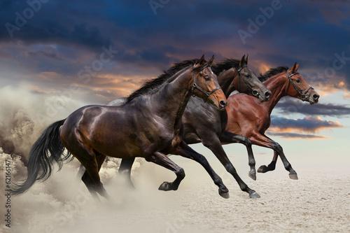 Fototapeta Horses running at a gallop along the sandy field
