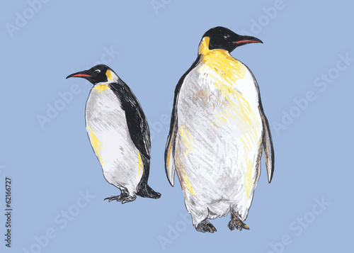 Hand colored drawing of penguins. Vector illustration