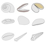 cartoon image of sea shells