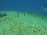 ship wreck underwater video