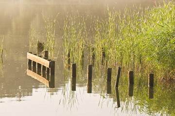 Stakes and reed at sunrise at the waterside
