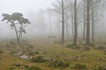 Niebla Galopante