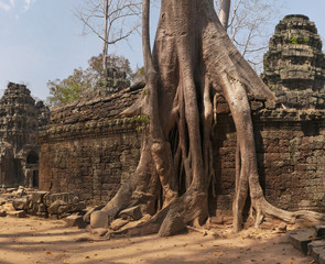 Ta Prohm, temple at Angkor, Cambodia