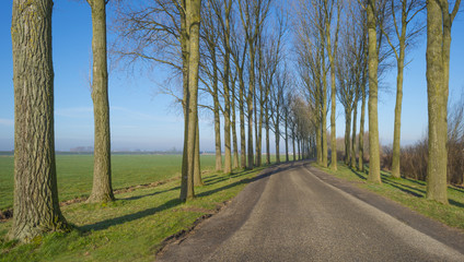 Row of trees along a countryside road