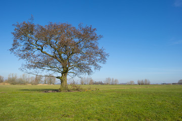Tree in a sunny meadow in winter
