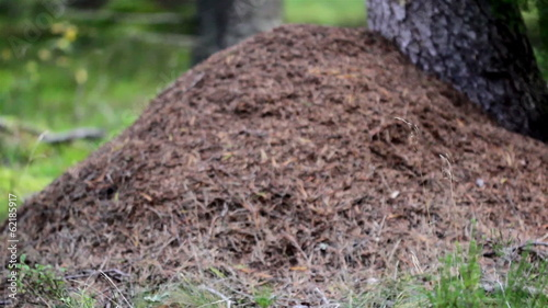 Anthill next to a big tree