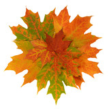Colorful Autumn maple leaves.