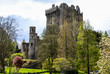 Irish castle of Blarney , famous for the stone of eloquence. Ire - 62189332