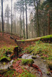 fallen tree near the stream in the natural park