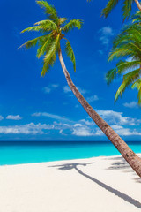 tropical sand beach with palm trees, summer vacation vertical ph