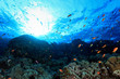 Coral reef and colorful fish in the red sea