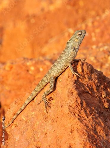 mottled lizard sitting on rocks and basking in the sun