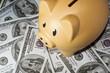 Orange Piggy Bank on Money
