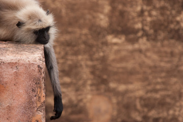 Affenlangeweile