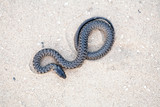 Serpent on sand
