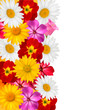 Flower border. Vector.