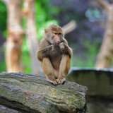 Young monkey sitting on tree trunk