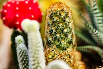 Colorful Cactus Close up II