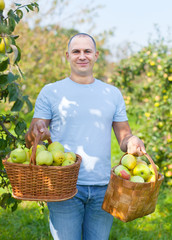 guy with basket of harvested apples